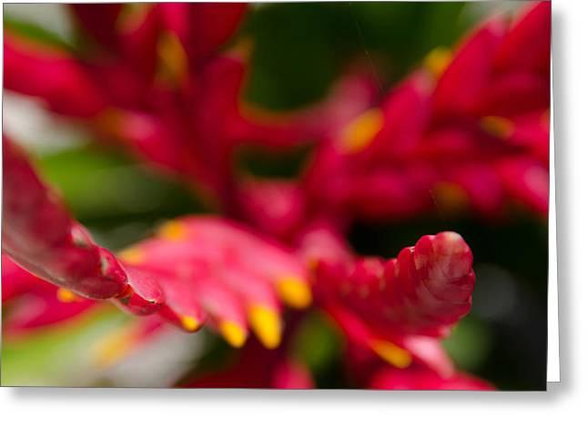Botanical Gardens Greeting Card by Mike Rivera