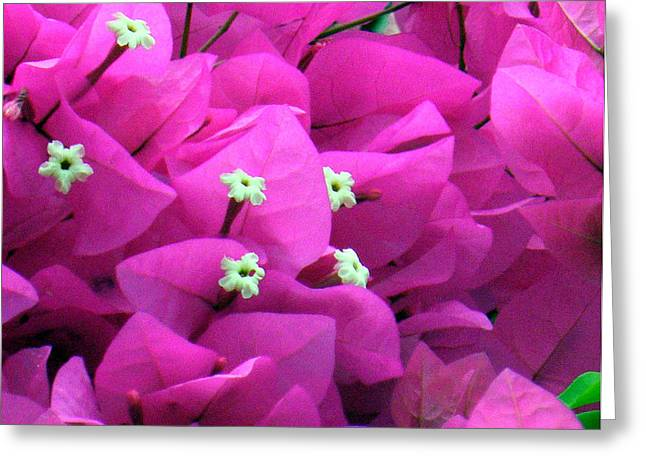 Greeting Card featuring the digital art Bougainvillea by Vicky Tarcau