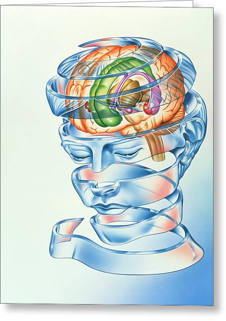 Brain Limbic System Greeting Card by John Bavosi