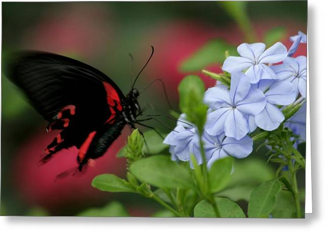 Butterfly Beauty Greeting Card by Valia Bradshaw