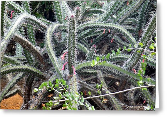 Cactus Greeting Card by Vicky Tarcau