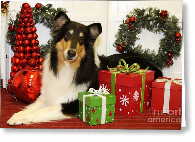 Christmas Portraits - Collie Greeting Card by Renae Laughner