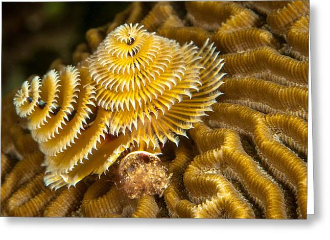 Christmas Tree Worm Greeting Card