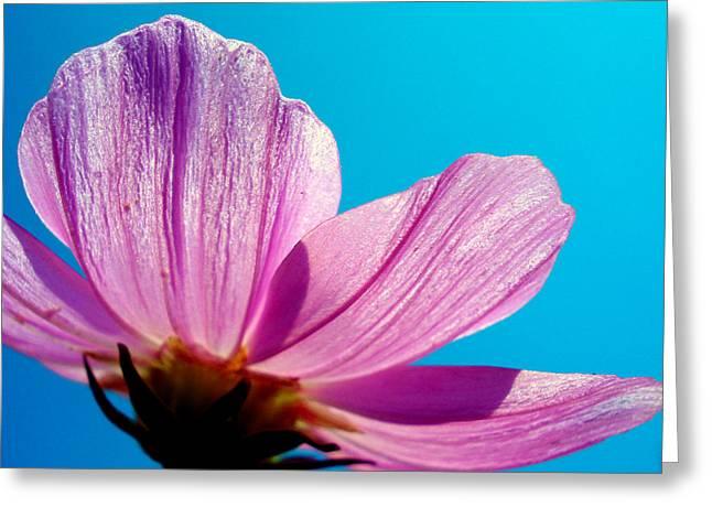Cosmia Flower Greeting Card by Sumit Mehndiratta