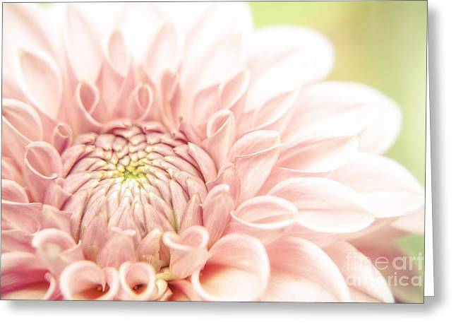 Dahlia Greeting Card by Martin Dzurjanik