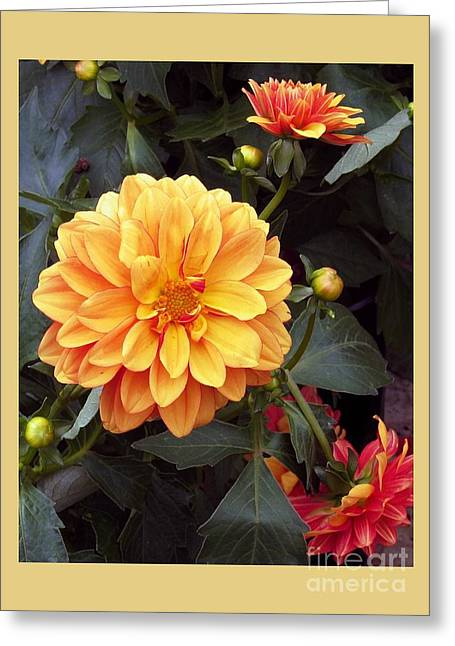 Dahlias Greeting Card by Dale   Ford