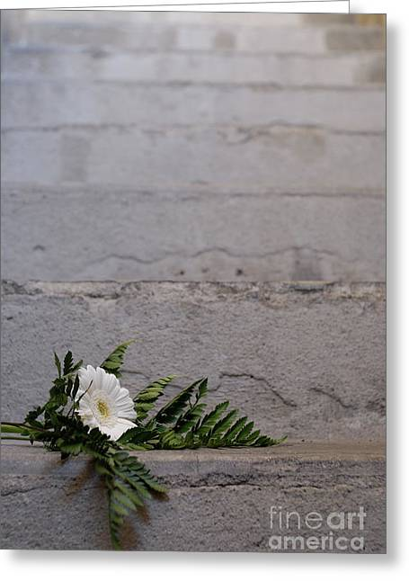 Daisy Flower On Concrete Steps Greeting Card