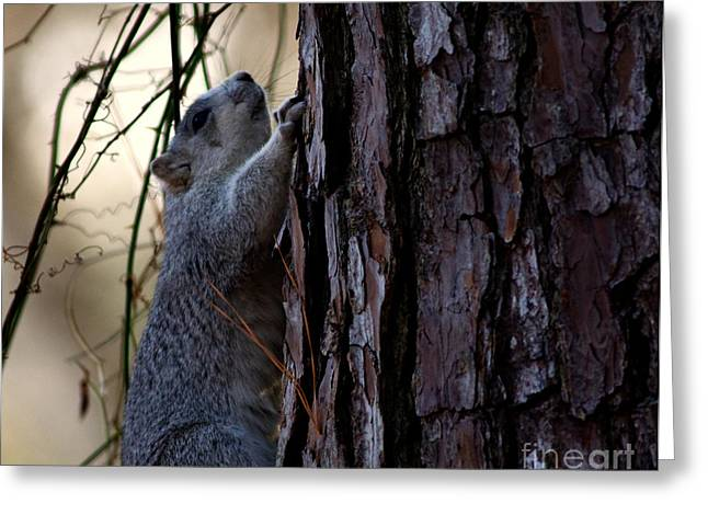 Delmarva Fox Squirrel Greeting Card