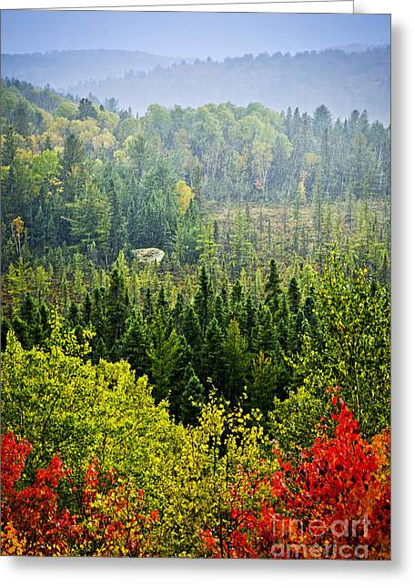 Fall Forest Rain Storm Greeting Card