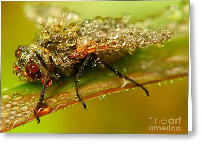Fly Greeting Card by Odon Czintos