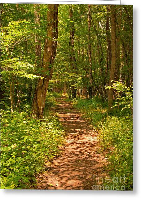 Forest Trail Greeting Card by Bob and Nancy Kendrick