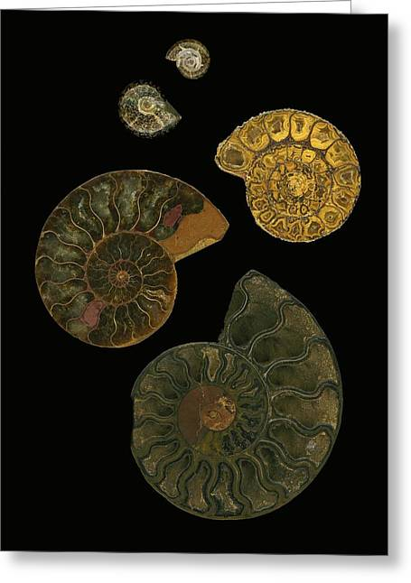 Fossilized Sea And Marine Shells Or Greeting Card