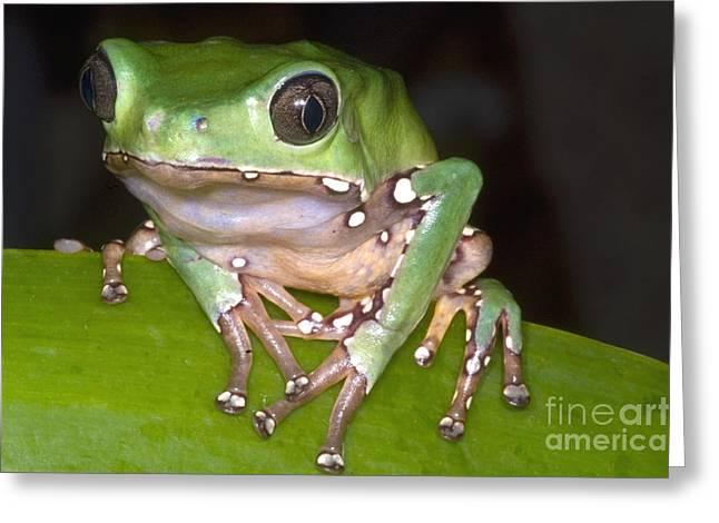 Giant Monkey Frog Greeting Card by Dante Fenolio