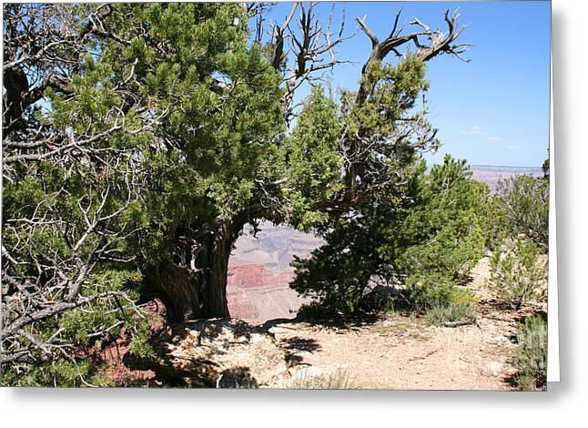 Grand Canyon National Park Arizona Usa Greeting Card by Audrey Campion