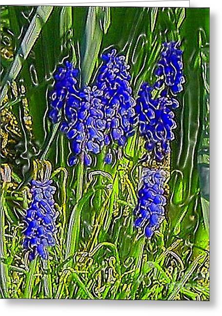 Greeting Card featuring the photograph Grape Hyacinths by Holly Martinson