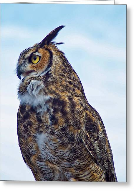 Great Horned Owl Greeting Card by Linda Pulvermacher
