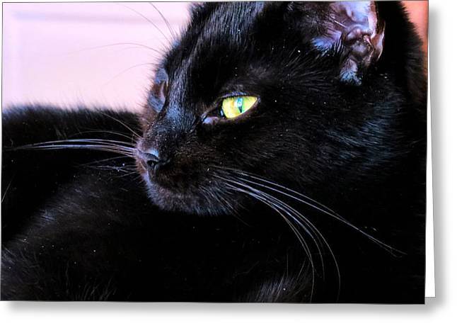 Green Eyes Greeting Card by Art Dingo