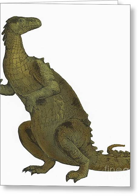 Iguanodon, Mesozoic Dinosaur Greeting Card by Science Source