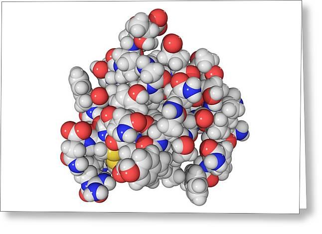 Insulin Molecule Greeting Card by Laguna Design