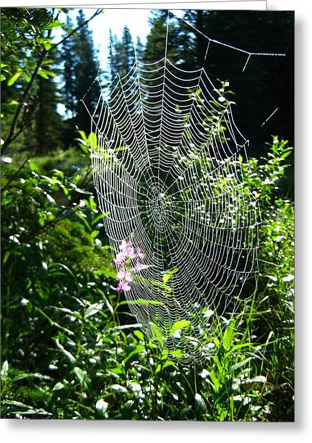 Intricate Spider Web Greeting Card