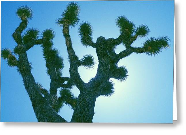 Joshua Tree Silhouette Greeting Card by Claire Plowman