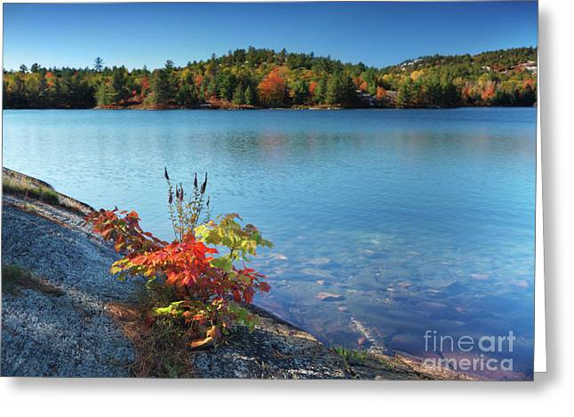 Killarney Provincial Park In Fall Greeting Card by Oleksiy Maksymenko