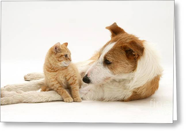 Kitten And Dog Greeting Card by Jane Burton