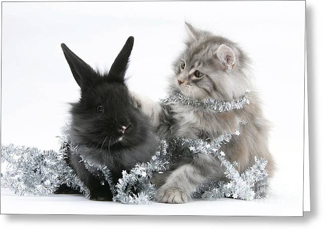 Kitten And Rabbit Getting Into Tinsel Greeting Card by Mark Taylor