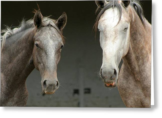 Lipizzan Horses Greeting Card by Angel  Tarantella