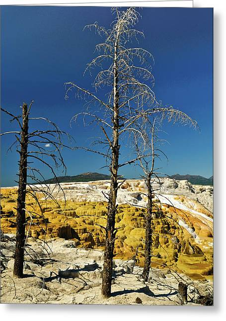Mammoth Upper Terrace Greeting Card by Greg Norrell