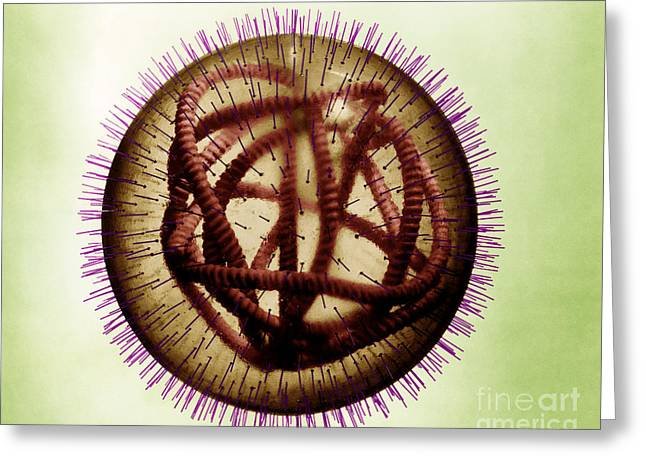 Measles Virus Greeting Card by Omikron