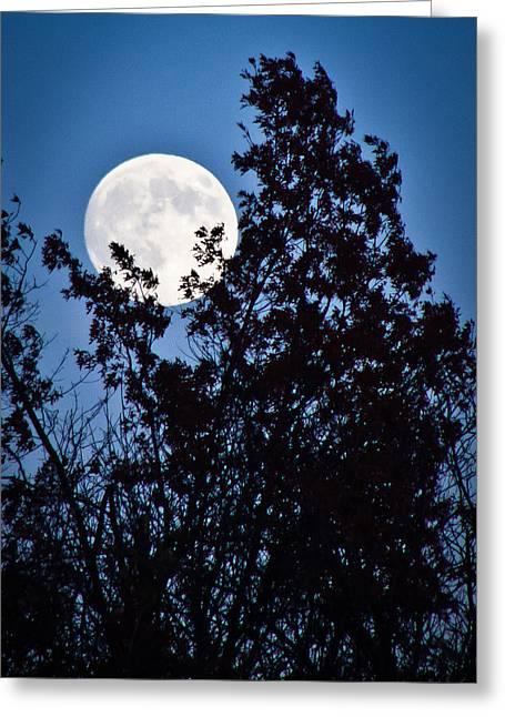 Moon Night Greeting Card by Jiayin Ma