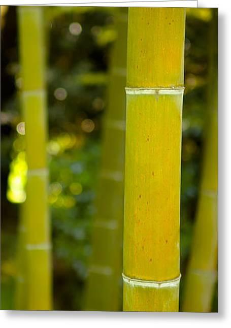 Mystical Bamboo Greeting Card by Sebastian Musial
