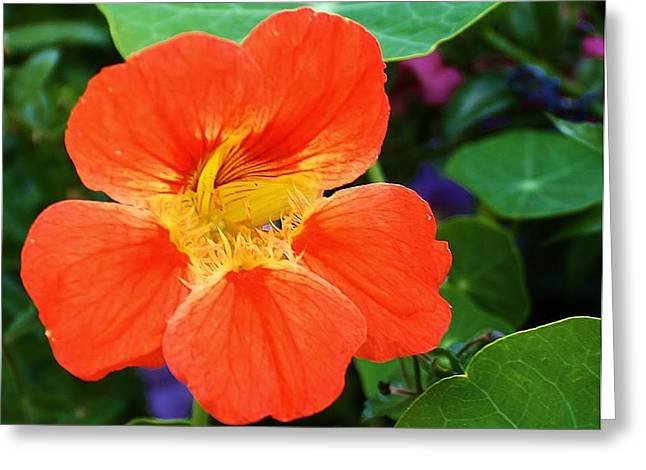Orange Delight Greeting Card by Bruce Bley