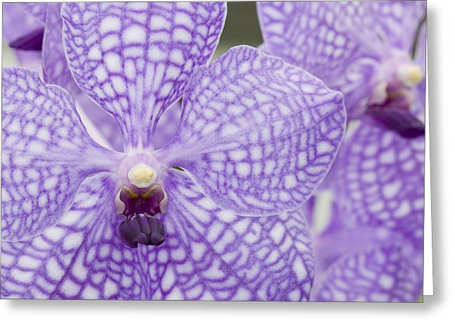 Orchid Flower Blossom Greeting Card by C Ribet