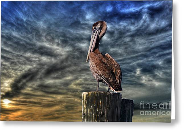 Greeting Card featuring the photograph Pelican At Sunset by Dan Friend