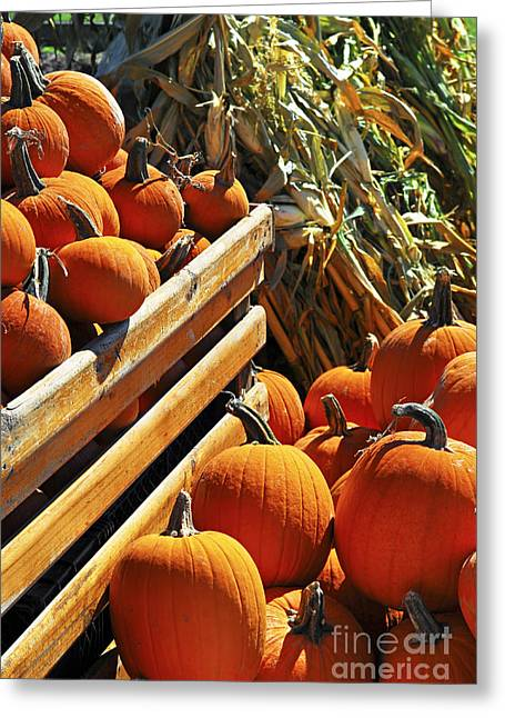 Pumpkins Greeting Card by Elena Elisseeva