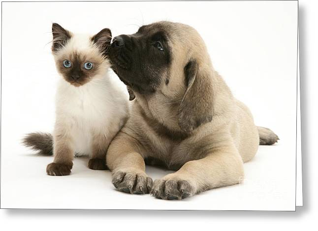 Puppy And Cat Greeting Card