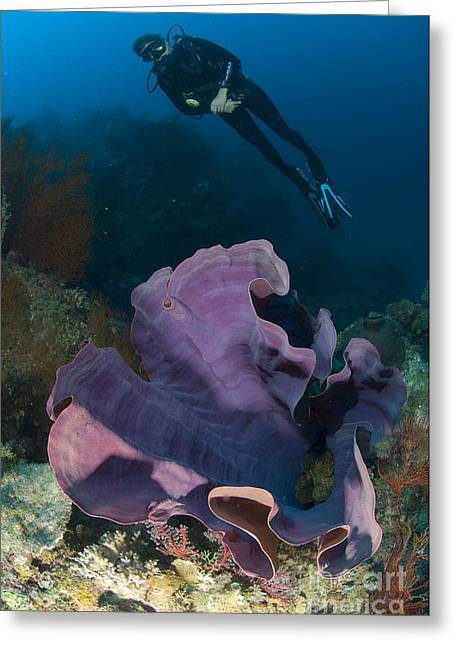 Purple Elephant Ear Sponge With Diver Greeting Card