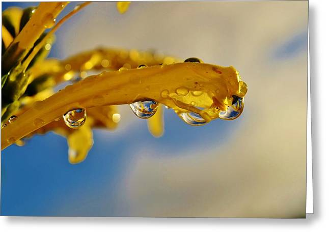 Greeting Card featuring the photograph Raindrops On Blossom by Werner Lehmann