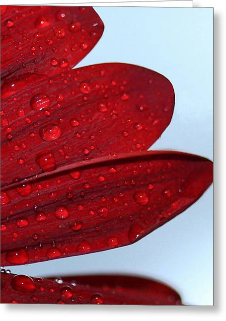 Raindrops On Red Flower Greeting Card