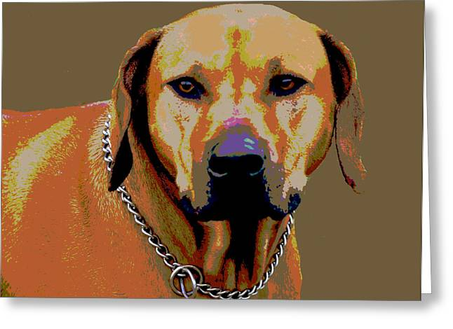 Rhodesian Ridgeback Greeting Card by Dorrie Pelzer