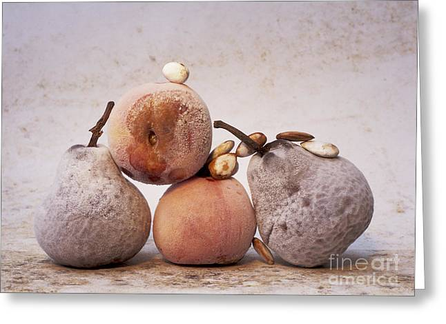 Rotten Pears And Apple. Greeting Card