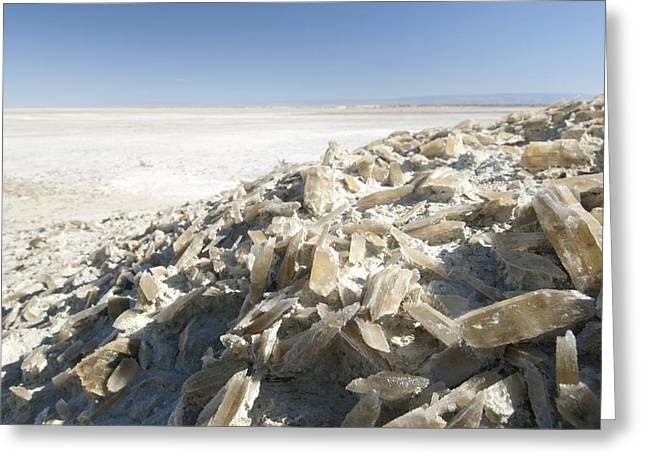 Selenite Crystals On A Dried Lake Bed Greeting Card by Louise Murray