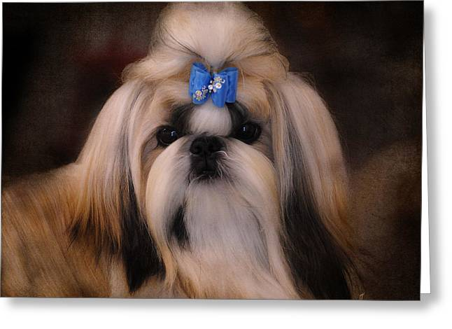 Shih Tzu Greeting Card by Jai Johnson