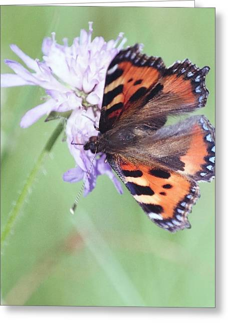 Small Tortoiseshell Greeting Card by Patrick Kessler