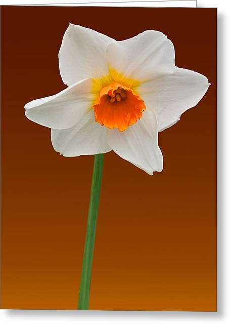 Spring Bulb Greeting Card