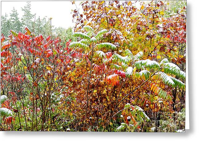 Sumac And Snow Along The Highland Scenic Highway Greeting Card by Thomas R Fletcher