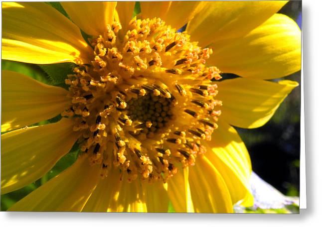 Sunflower No.17 Greeting Card by Christine Belt