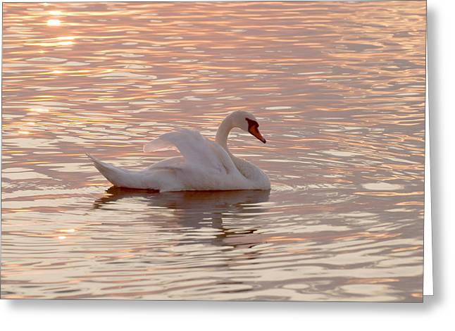 Swan In The Lake Greeting Card by Odon Czintos
